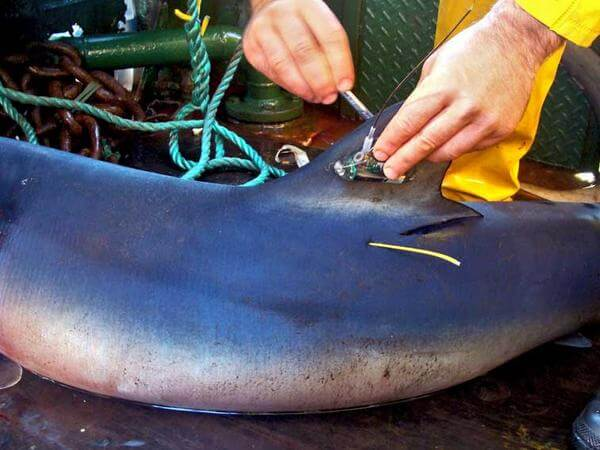 Master FNPPSF du Carnon Fishing Club à l'honneur pour les requins et raies de Méditerranée