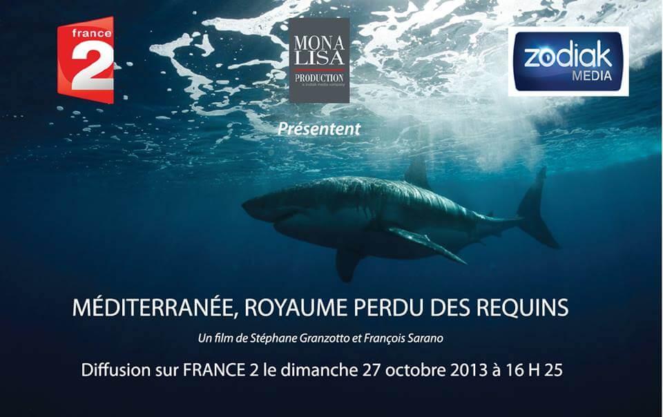Un documentaire des plus attendus sur les requins de Méditerranée !