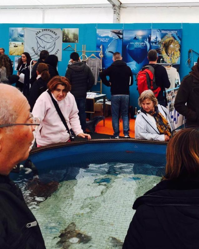 Association Ailerons requin raie Méditerranée