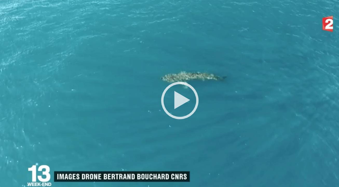 Requin pèlerin France 2 agde