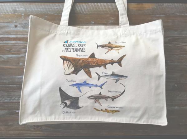 requin sac méditerranée
