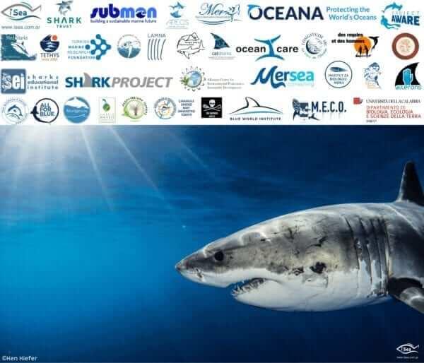Appel auprès des autorités tunisiennes pour les alerter sur des pêches répétées de grand requin blanc